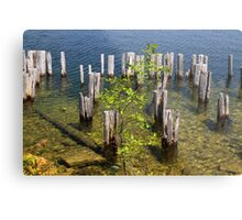 Old Pilings Fayette State Park 4 Metal Print
