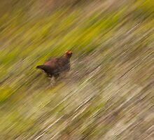 Run! by brilightning