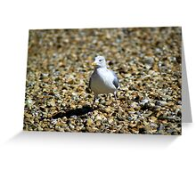Young herring gull on the beach Greeting Card
