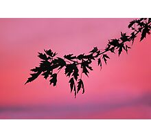 Warm Summer's Evening Photographic Print