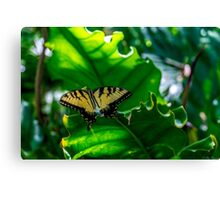 Under the Forest Canopy Canvas Print