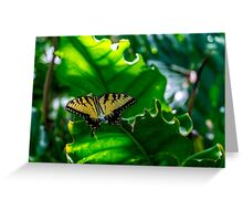 Under the Forest Canopy Greeting Card