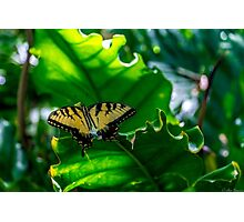 Under the Forest Canopy Photographic Print