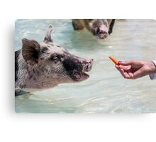 Swimming Pigs of Exuma Cays; Pt.4 Canvas Print