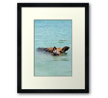 Swimming Pigs of Exuma Cays; Pt.5 Framed Print