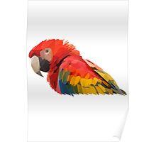 Geometric Scarlet Macaw Head Poster