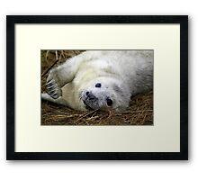 Playful grey seal pup Framed Print