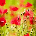 Art of Poppy by David Tovey by David Tovey