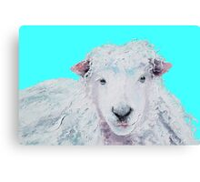 A Woolly sheep on turquoise background Canvas Print