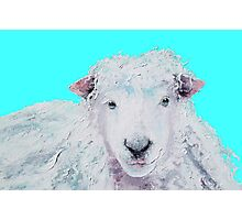 A Woolly sheep on turquoise background Photographic Print