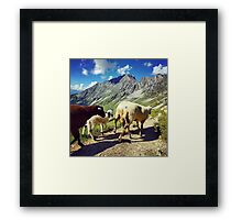 Sheep in the Alps, Nordkette Mountain, Innsbruck Austria Framed Print