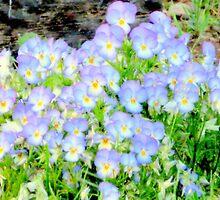 Lavender Day Dreams by Diane Arndt