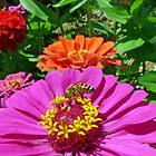 Happy Honeybee by Susan S. Kline