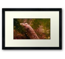 Soaked to the Bone Framed Print