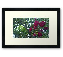 .Autumn Blooms. Framed Print