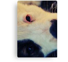 Stormy the Dog Canvas Print