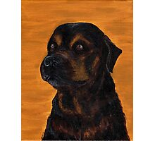 Rottie Bullmastiff Mix Photographic Print