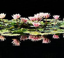 Group of pink water lilies by Maryna Gumenyuk