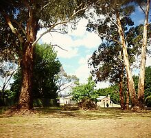 *Home amongst the Gum Trees - Creswick, Vic. Australia   by EdsMum