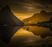 White Heron/Kotuku sunset by Paul Mercer