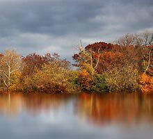 Autumn Pond Reflections  by Jessica Jenney