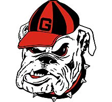 g bulldog Photographic Print