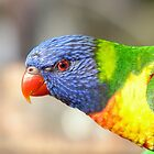 Wild parrot eye contact by PamsPetPictures