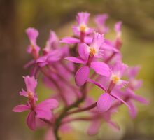 Crucifix Orchid Bunch by Michael Matthews