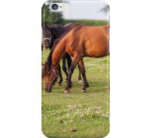Golden hour horses iPhone Case/Skin
