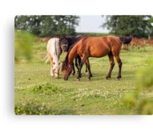 Golden hour horses Canvas Print