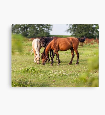 Golden hour horses Canvas Print