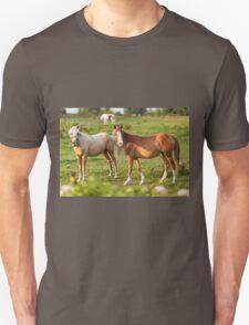 Beautiful horses sharing a look. Unisex T-Shirt