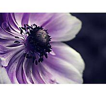 Anemone Photographic Print