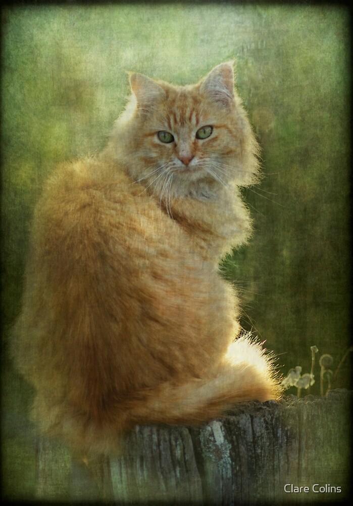 My fury friend Juniper by Clare Colins