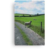 Elegant Sheep Canvas Print