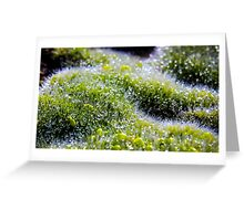 Dew Drops #3 Greeting Card