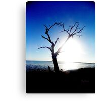 beautiful old tree Canvas Print