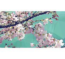 Meshed Up Japanese Sakura Blossoms Photographic Print