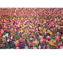 Meshed Up Colourful Summer Tulip Field Photographic Print