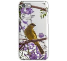 Yellow Honeyeater in a Jacaranda Tree iPhone Case/Skin