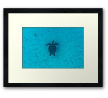 Turtle Silhouette Framed Print