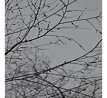 Branches Impressions  Photographic Print