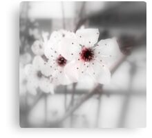 First Spring Blossoms Canvas Print