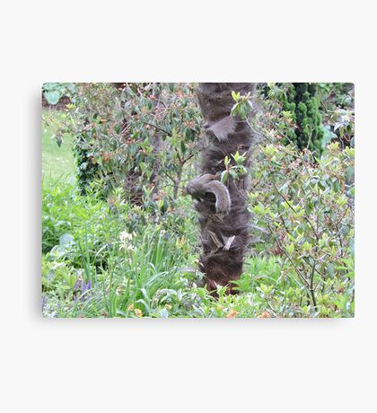 Camouflaged  Canvas Print