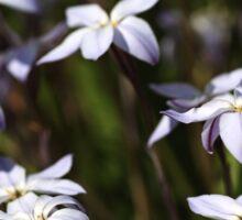 Star White Flowers Sticker