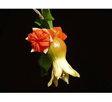 UNIQUE BEAUTIFUL FLOWER - SERIES 10 Photographic Print