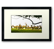 The Herd at Attention Framed Print