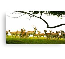 The Herd at Attention Canvas Print