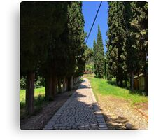 Cypress alley Canvas Print