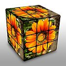 Rubics Cube - Orange Gazania by EdsMum